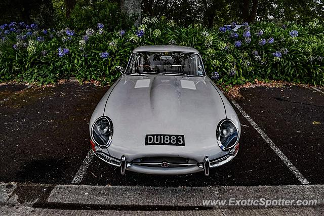 Jaguar E-Type spotted in Auckland, New Zealand