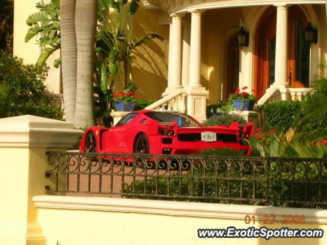 Ferrari Enzo spotted in Tampa, Florida on 01/22/2006